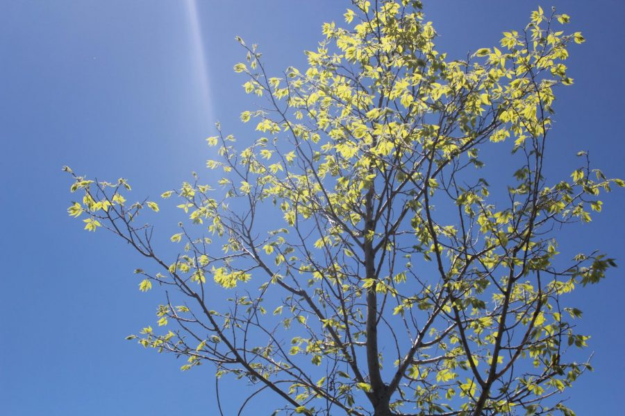 A blooming tree outside of the TEC campus