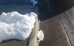 Winter Rolls In