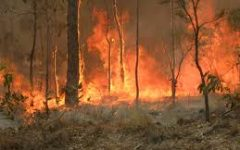 Students react to wildfires in Australia